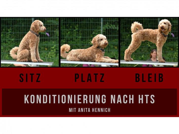 """Online-Film """"Konditionierung nach HTS"""""""