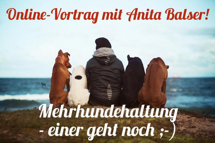 """Onlinevortrag """"Mehrhundehaltung - einer geht noch ;-)"""""""