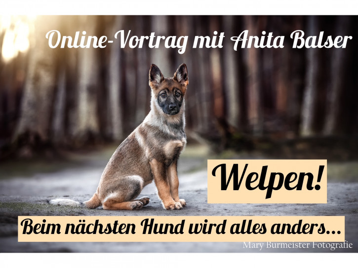 """Onlinevortrag """"Welpen! Beim nächsten Hund wird alles anders..."""""""